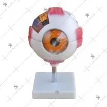 Giant Eye Model