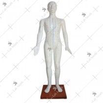 Acupuncture Model 178CM