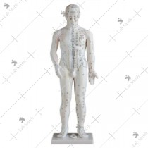 Acupuncture Model 70CM