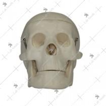 Miniature Plastic Skull
