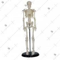 45CM Mini Skeleton