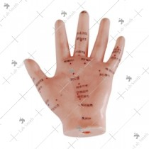 Hand Acupuncture Model 13CM
