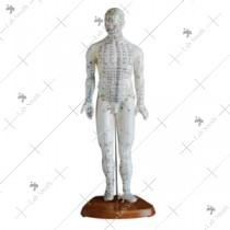 Acupuncture Model 46CM Male