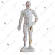 Acupuncture Model 26CM