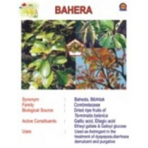 Bahera Information Chart