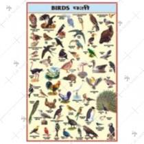 Birds Chart