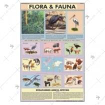 Flora & Fauna Chart