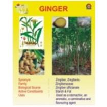 Ginger Chart