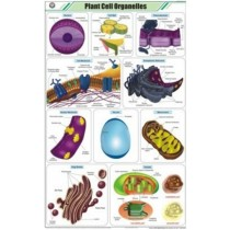 Plant Cell Organelles Chart