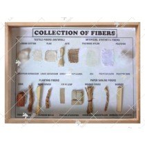 Collection of Fibers