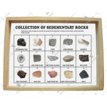 Collection of 15 Sedimentary Rocks
