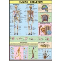 The Skeleton Chart
