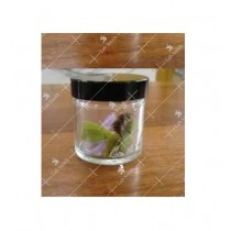 Tissue Culture Jar (Glass)
