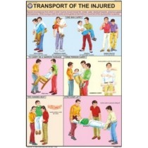 Transport of the injured Chart