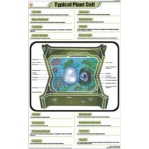 Typical Plant Cell chart